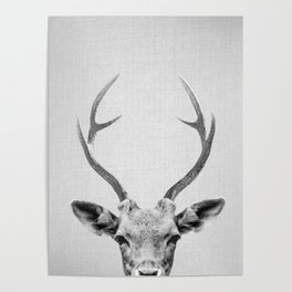 Deer - Black & White Poster