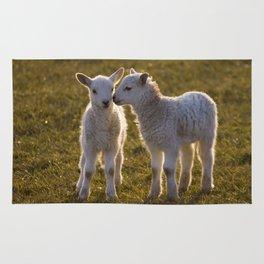Cute little lambs Rug
