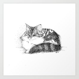 Maine Coon Cat - Pen and Ink Art Print