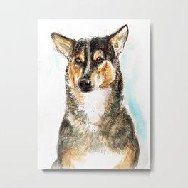 Sweet stray dog Metal Print