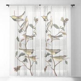 Black throated green warbler, Birds of America, Audubon Plate 399 Sheer Curtain