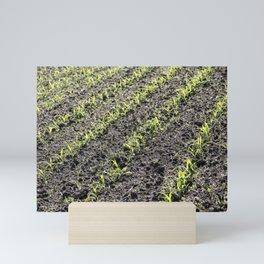Corn Field 7 Mini Art Print