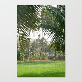 Exotic Palm Trees Canvas Print
