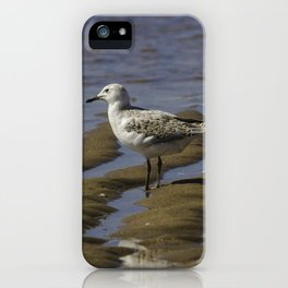 Juvenile Silver Gull iPhone Case