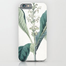 Flower 1334 justicia guttata Dotted flowered Justicia14 iPhone Case