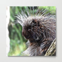 toony New World porcupines ( Erethizontidae) Metal Print