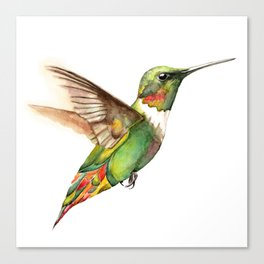 Hummingbird Magic Canvas Print