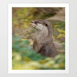 Otter Amongst Autumn Leaves Art Print