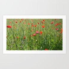 Poppies float Art Print