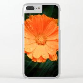 Captivating Calendula Clear iPhone Case