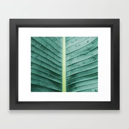 After the Rain In Paradise Framed Art Print