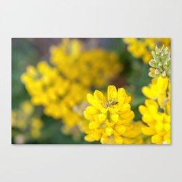 Yellow Lupin and a Ladybug Canvas Print