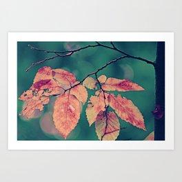Yesterday autumn leaves in botanic garden Art Print