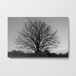 richmond park- b-w Metal Print