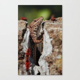 The random Lizard Canvas Print