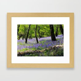 Bluebell Wood. Framed Art Print