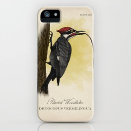 Pileated Woodlicker iPhone Case