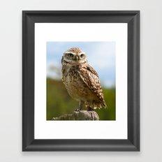 The Burrowing Owl Framed Art Print