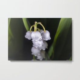 Lily of the valley close up Metal Print