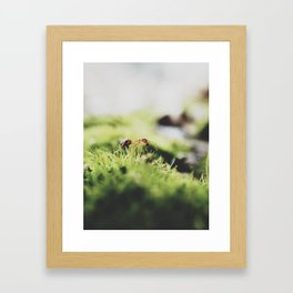 ant. Framed Art Print
