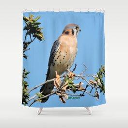American Kestrel on Watch in La Verne Shower Curtain