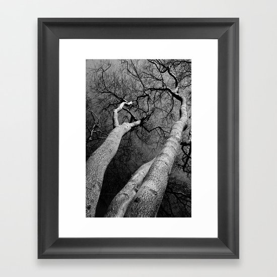 Monochrome Trees Framed Art Print
