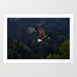 Adler Eagle Art Print