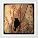 Grackle  by gothicolors