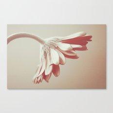 A single flower Canvas Print