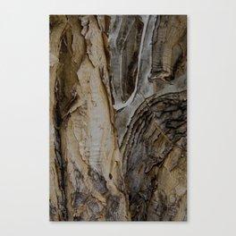tree bark layers Canvas Print