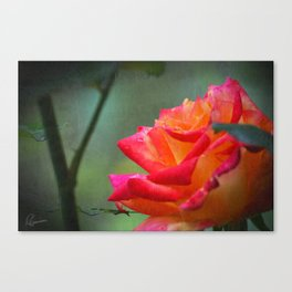 Rose Vintage Canvas Print