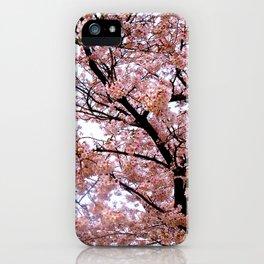 Sakura Tenjou iPhone Case