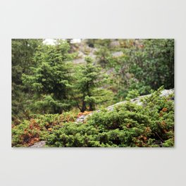 Within the Silent Forest Canvas Print