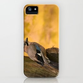 Jay bird in the park iPhone Case