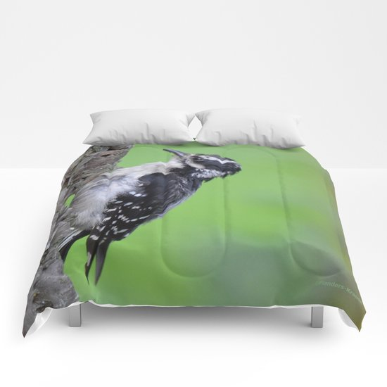 Downy Woodpecker! Comforters