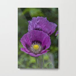 Lilac Poppy Metal Print