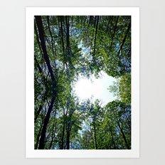 Where the Sky Met the Trees Art Print