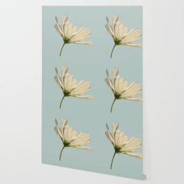white cosmea Wallpaper