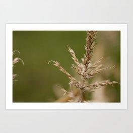 Macro Harvest Art Print