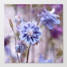Columbines blue Canvas Print