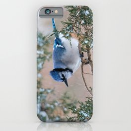 Hunkered Down (American Blue Jay) iPhone Case