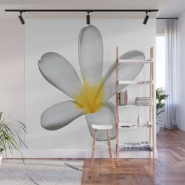 A Single Plumeria Flower Isolated Wall Mural