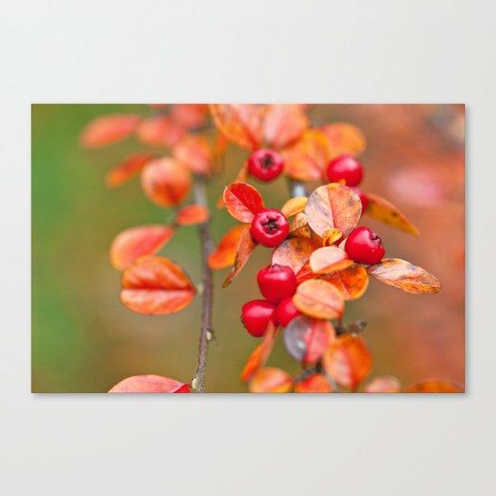 Autumnal Cotoneaster 9379 Canvas Print