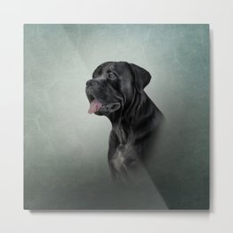 Drawing dog Cane Corso - Italian Mastiff Metal Print