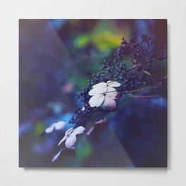 Hydrangea Metal Print