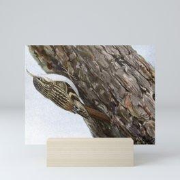 Seep-Seep the Brown Creeper1 Mini Art Print