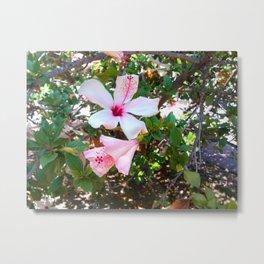 Flirtatiously Pink Hibiscus Metal Print
