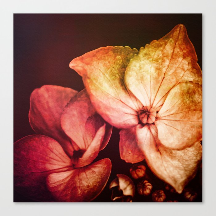 Dream Flower 6 Canvas Print