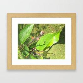 Buggy on a pear tree Framed Art Print