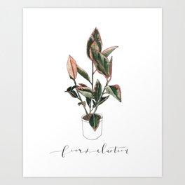 Ficus Elastica- Rubber Tree Plant Art Print